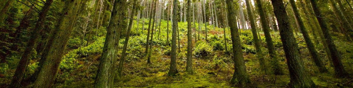 Træer-skov-natur